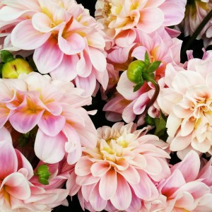 Les petites merveilles du fleuriste en bas de chez moihellip