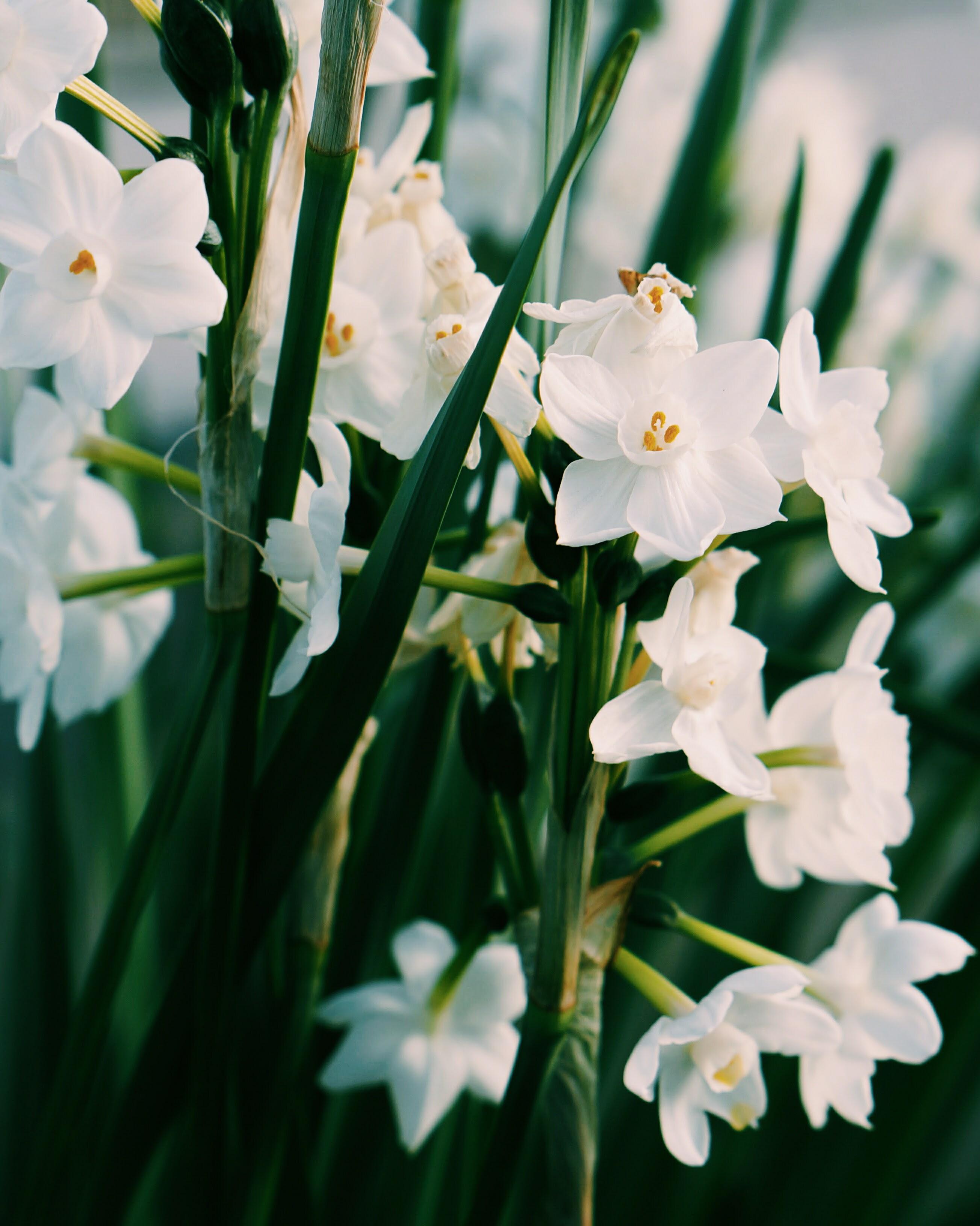 Balade fleurie aux kew gardens soyons futiles for Jardin botanique hiver 2016
