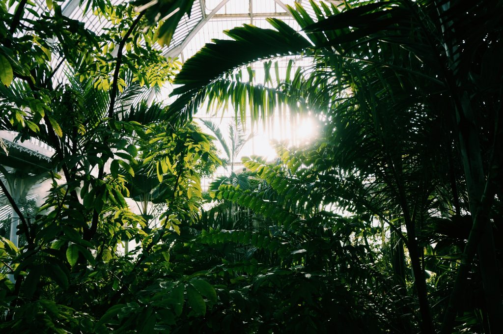 Palm House Kew Garden London Jardin botanique Londres avis 11