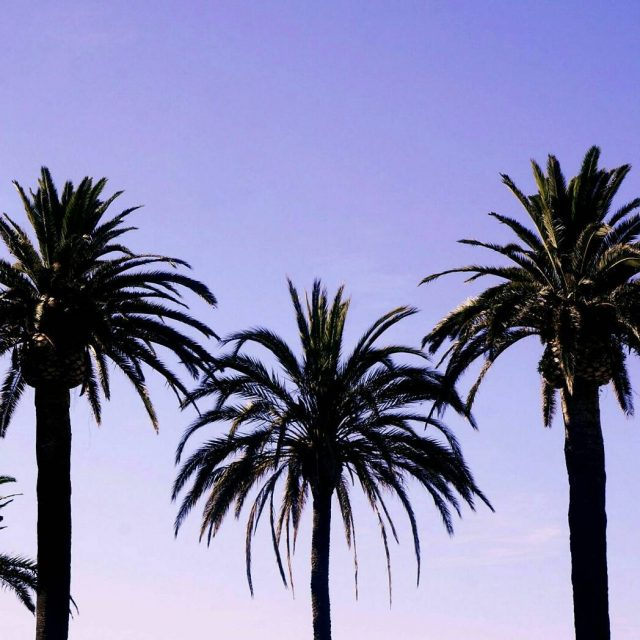 Happy Friday !     palmtrees corsica latergramhellip